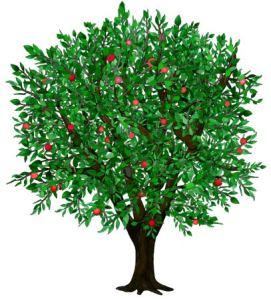 Apple-Tree-Harvest-sm