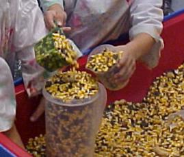 measuring corn
