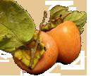 persimmon trans