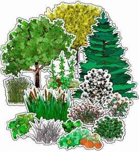 plants-mb-sm
