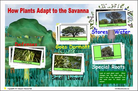 23-plant-adapt-b-sm